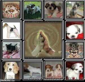 Клубные щенки разных пород - Изображение #1, Объявление #821382