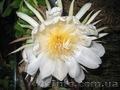 Много разной экзотики плодовые и цветущие