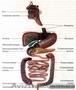 Чистка толстого кишечника - Гидроколонотерапия!!