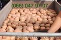 Продам картофель продам картоплю