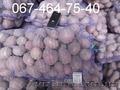 Продам картофель оптом от  производителя, отгрузка от 20 тонн. Звони.
